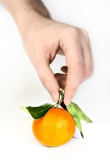 Free Mandarin In Hand Royalty Free Stock Images - 8389109