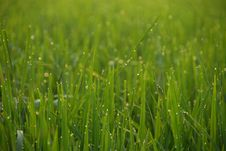 Free Grassy Field Royalty Free Stock Photos - 8389128