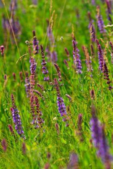 Free Spring Stock Image - 8389871
