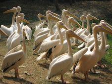 Free Birds Royalty Free Stock Image - 8389956