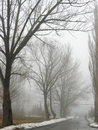 Free Obscure Woods In Tight Fog Royalty Free Stock Photography - 8390857