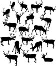 Free Nineteen Deer Silhouettes Royalty Free Stock Photo - 8391825