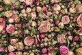 Free Roses Royalty Free Stock Photo - 8395355