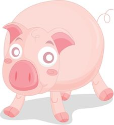Free Pig Stock Photo - 8390300