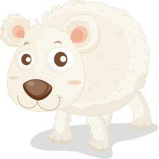 Free Polar Bear Royalty Free Stock Image - 8390546