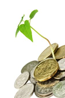 Money Tree Royalty Free Stock Photo