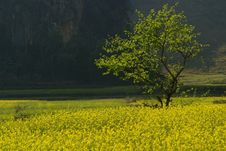 Free Lonely Tree And Yellow Flowers Royalty Free Stock Photos - 8391708