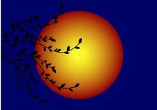 Free Sunset Stock Image - 8392231