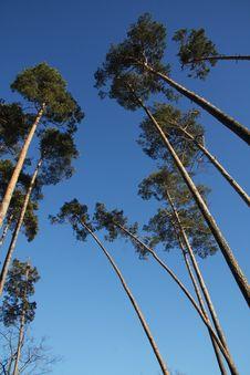 Free Trees Stock Photos - 8392313