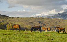 Free Mountain Range Of La Acebeda, Madrid, Spain Stock Photos - 8396333