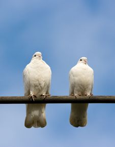Free Doves Royalty Free Stock Photo - 8396515