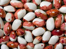 Free Beans Stock Images - 8397454