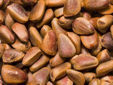 Free Cedar Nut Stock Photo - 8397520