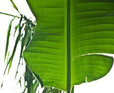 Free Plants Royalty Free Stock Photos - 8398348