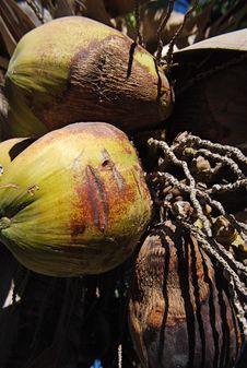 Free Coconuts Stock Photos - 8398843