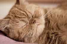 Free Red Kitten Stock Photography - 8399282