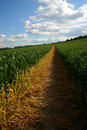 Free Straight Path Through Crop Field Royalty Free Stock Photography - 843767