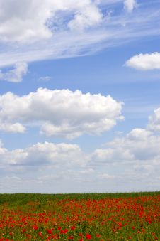 Free Poppy And Cloudy Sky Royalty Free Stock Image - 841656