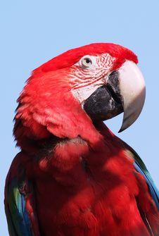 Free Scarlet Macaw Stock Photos - 842193