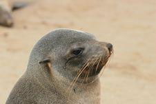 Free Seal Stock Photos - 843653