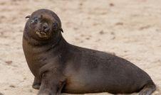 Free Seal Royalty Free Stock Image - 843656