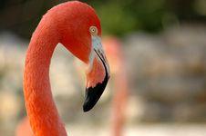 Free Flamingo Royalty Free Stock Photo - 844115