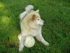 Free A Dog And His Ball Stock Photo - 844650