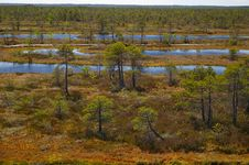Free Latvian Swamp (4) Royalty Free Stock Image - 845096
