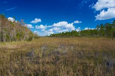 Free Marshes Stock Images - 845614