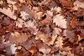 Free Autumn Leaf Stock Photos - 8402153