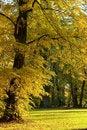 Free Autumn Trees Royalty Free Stock Image - 8402276