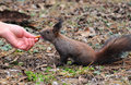 Free Squirrel Royalty Free Stock Image - 8405956