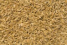 Free Caraway Seeds Stock Photo - 8400150