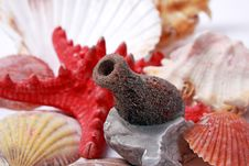 Free Seashells Composition Stock Image - 8401101