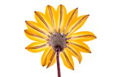 Free Original Yellow Flower View Royalty Free Stock Photos - 8401268