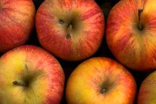 Free Apples Stock Photography - 8401512
