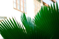 Free Palm Leaf Royalty Free Stock Photos - 8402728