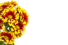 Free Bouquet Of Chrysanthemum Royalty Free Stock Photography - 8403027