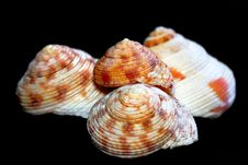 SeaShell Series 7 Royalty Free Stock Images