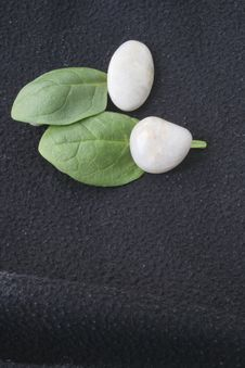 Free Spinach Leaves And Pebbles Royalty Free Stock Photography - 8403787