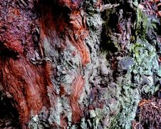 Free Colorful Bark Royalty Free Stock Photos - 8403958