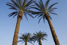 Free Jerusalem Palms Royalty Free Stock Photo - 8404035