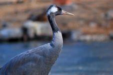 Free Gray Crane Stock Image - 8404111