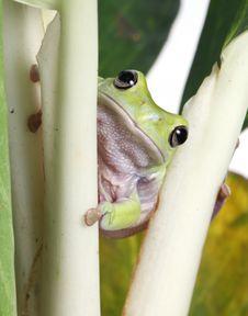 Free Frog Stock Photo - 8404730