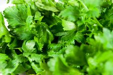 Free Parsley Royalty Free Stock Photos - 8405098