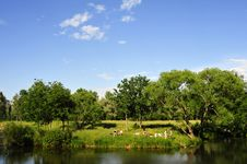 Free Picnic By The River Royalty Free Stock Images - 8405309