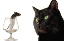 Cat And Rat Royalty Free Stock Images