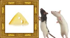 Free Rat Royalty Free Stock Photo - 8405715