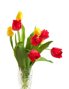 Free Red And Yellow Tulips Stock Images - 8406264