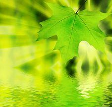 Free Green Leaf Stock Photo - 8406320